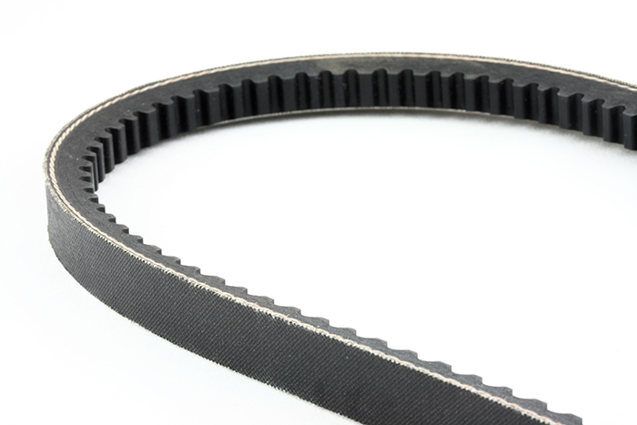 zagorskid090500003.jpg - timing belt isolated